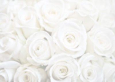Bride-Header4